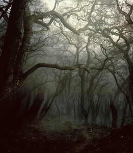 phatpuppy_forest_primeval_stock_by_phatpuppy-d4q71b0-261x300