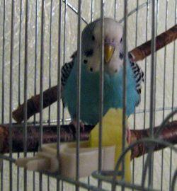 Попугай и нечто