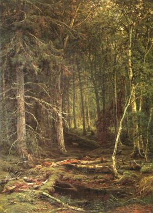 В лесу за грибами