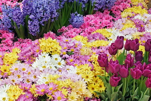 Стоит ли открывать цветочный магазин?
