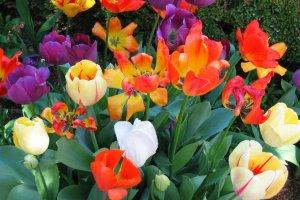 Название цветочного магазина - чем оно важно?