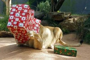 Ищем новогодние подарки