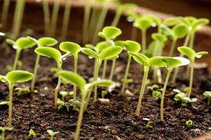 Правильно подготовленные семена - залог хорошего урожая