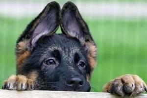 Немного о происхождении собак.