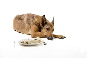 Овощи и фрукты в рационе собаки
