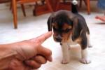 Важность последовательности и терпения при воспитании собаки