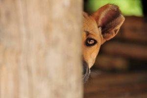 Предоставьте собаке возможность действовать по своему усмотрению. Например, присядьте на корточки около статуи, которая пугает вашего питомца, разговаривайте с собакой ободряюще