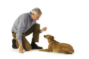 Обучение собаки команде «Лежать!»