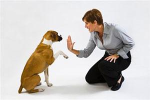 Обучение собаки команде «Голос!»