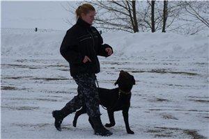 Обучение собаки команде «Рядом!»