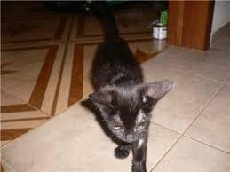 Хондропротекторы для кошек