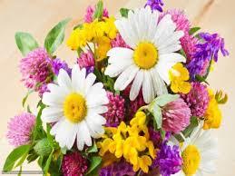 Заказ цветов с доставкой